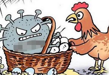 中国公民在韩国注意防范禽流感